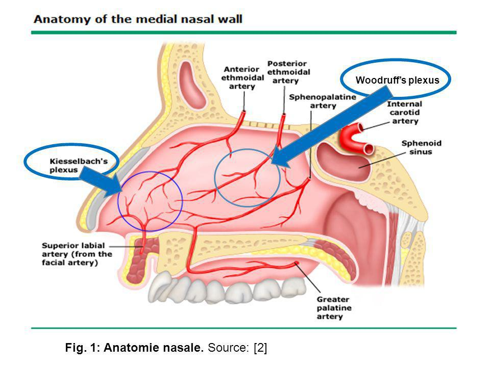 Fig. 1: Anatomie nasale. Source: [2]